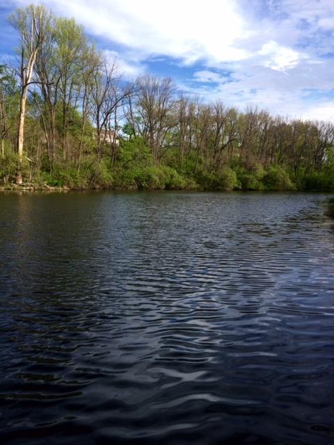 Pond Odor Treatment